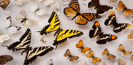 The butterfly display was a popular exhibit.
