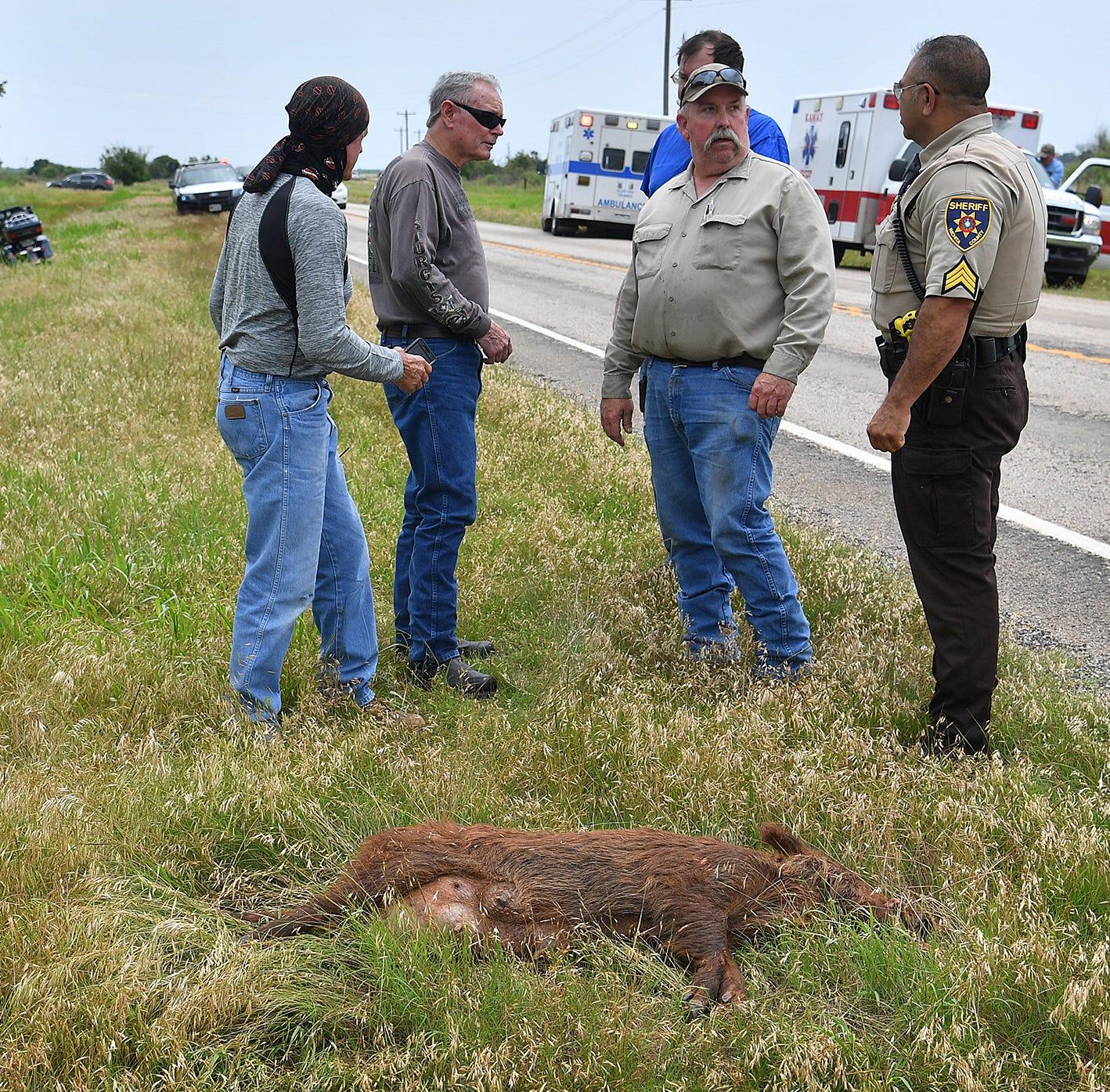 Motorcyclist injured after hitting feral hog