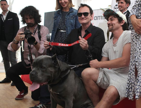 Director Quentin Tarantino poses for photographers with the Palm Dog award for the best canine performance at the Cannes Film Festival. It was won by Brandy, the pit bull owned by Brad Pitt's character in the film.