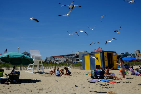 Rehoboth Beach wants you to stop feeding seagulls and to clean up after your pooch , or you'll be fined.