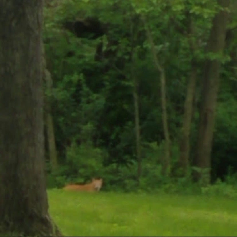 Police, DNR investigate new reported sighting of Des Moines mountain lion