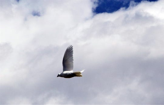 A dove flies, Monday, May 27, 2019, after being released during a Memorial Day service.