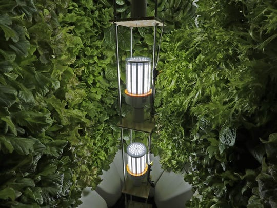 Fork Farms grows lettuce around LED lights inside a hydroponics module at its site. A Neenah High School teacher is hoping to win a grant to fund getting hydroponic units into every classroom in the district.