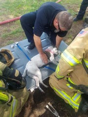 Newark medics work to revive a dog found unresponsive in a fire at a Newark apartment complex on Tuesday, May 28, 2019.