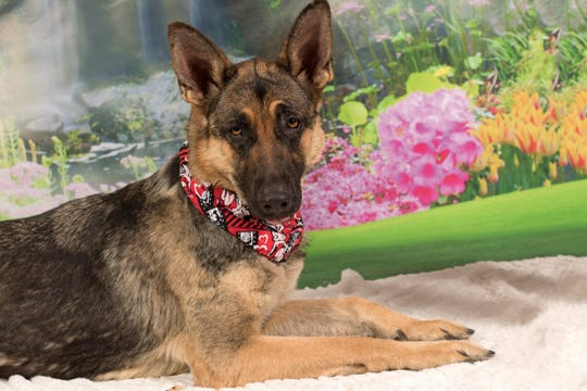 Marana is available for adoption at 952 W. Melody Ave. in Gilbert. For more information, call 480-497-8296 or email FFLdogs@azfriends.org.