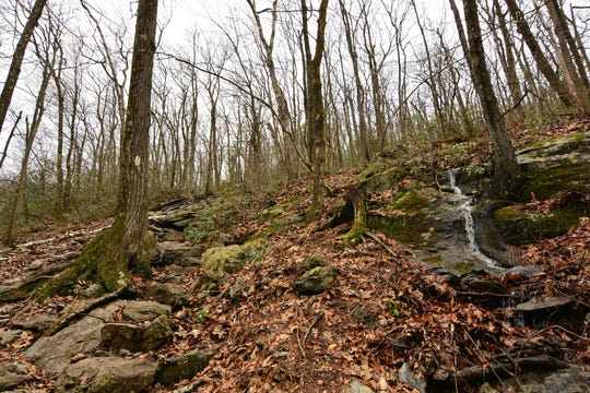 The trail climbs at a moderate pace to Bear Mountain summit.