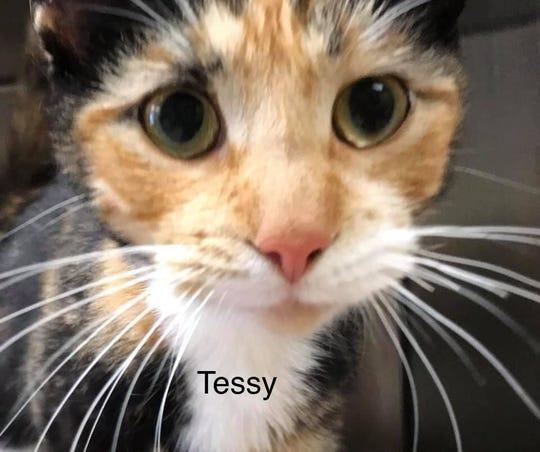 Tessy