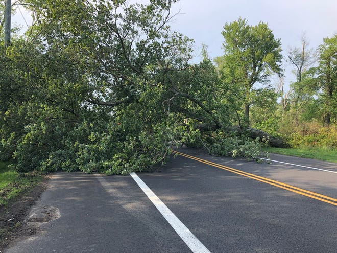 Police are detouring traffic until a fallen tree at the Cumberland-Gloucester counties border can be removed. May 28, 2019