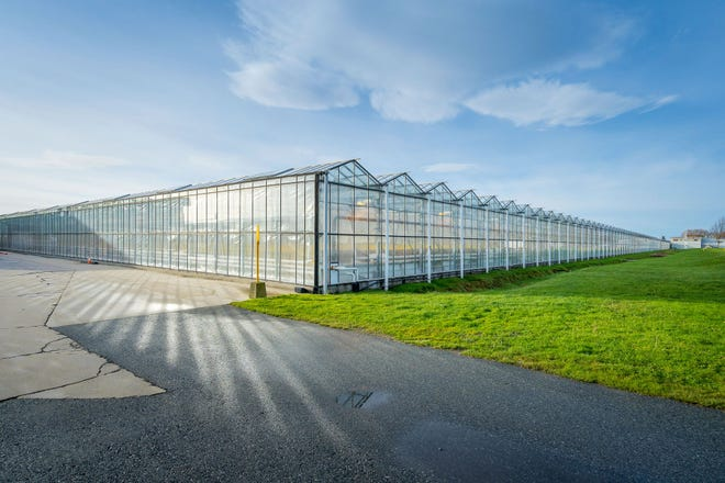 AgraFlora's main focus is on the operation of two cannabis cultivation facilities in Canada - AAA Heidelberg, a licensed indoor cultivation operation in London, Ontario, and their marquee asset – a joint venture interest in Propagation Services Canada and their large-scale 2.2 million square-foot greenhouse complex in Delta, British Columbia.