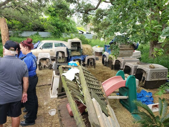 Aransas Pass Police Department animal control officers investigated the home of a 63-year-old man. They found 42 dogs. Most were living in deplorable conditions.