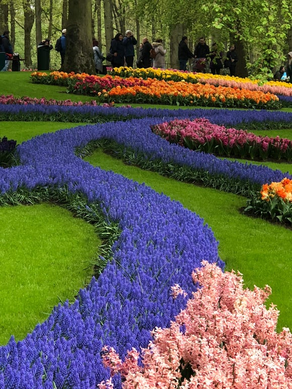 Keukenhof Gardens near Amsterdam in full bloom.