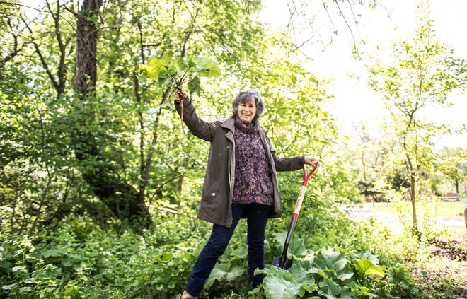 Lynn Landes, founder of local foraging and educational group The Wild Foodies of Philly, stands with a Burdock plant, freshly pulled from the ground at Awbury Arboretum. (Grace Dickinson/The Philadelphia Inquirer/TNS)