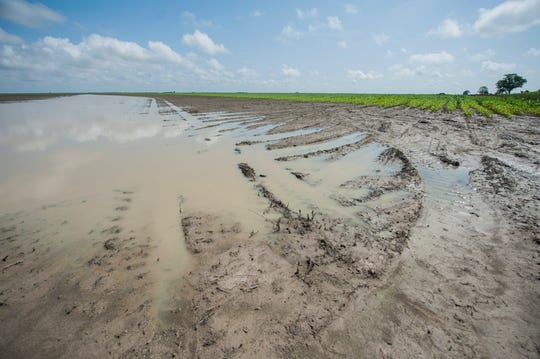 Saturated, muddy fields left from heavy rain and flooding lay unusable on farmer Payton Potter's Arcola, Miss., farm. May 20, 2019
