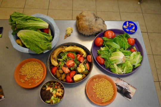 A variety of animal diets on display includes veggies and fruits for primates and giraffe and full, frozen chicks, rabbits, and miniature mice for the snakes