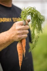 Carrots are one of Whitton Farms' spring crops.