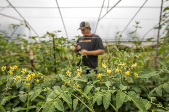 High tunnels help farmers like Keith Forrester better grow produce such as tomatoes.