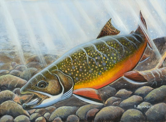 A brook trout chases a fly in this painting by Ryan Rickaby that placed first in the design contest for the 2019 Wisconsin Inland Trout stamp.