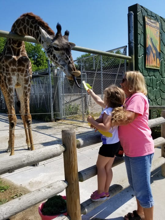 Visitors can feed giraffes at the Racine Zoo.