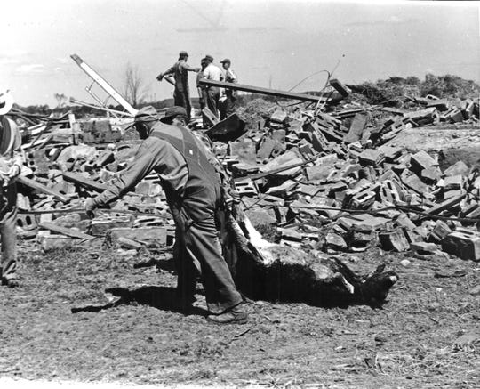 The long hard job of cleaning up after the June 4, 1958, tornado in Colfax included moving dead animals, like this calf, from the wreckage of a barn on the James Schindler farm.