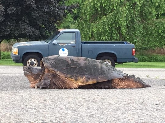 Picatinny Arsenal Garrison Commander Lt. Col. Samuel Morgan took this photo of a turtle while inspecting the base after fierce thunderstorms tore through North Jersey the night before. May 29, 2019.