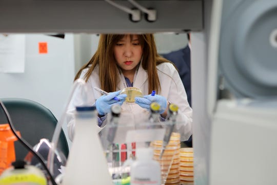 Research Technician, Annie Lee, counts colonies from mice liver infected with Candida albicans at Hackensack Meridian Health's Center for Discovery & Innovation (CDI), on the Clifton and Nutley border. Wednesday, May 29, 2019