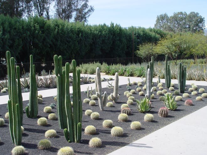 A cactus garden at Sunnylands Center & Gardens in Rancho Mirage.