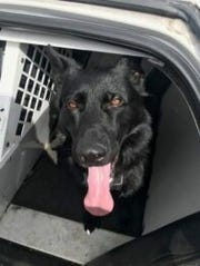 Redding police K-9 Hank