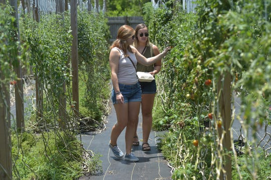 "Katie O'Hara (left), and Kate Fraser, both of Jupiter, examine the organic tomatoes on the vine while touring the garden at Ground Floor Farm on Sunday, May 26, 2019 in Stuart. ""I think it's awesome that they grow their own food, and sell it in their café/restaurant,"" Fraser said. The pair were with several other friends spending the afternoon at the farm. ""I think it's really cool when you drive up you don't expect there to be all this greenery and all these fresh vegetables out here, but it's really a unique spot,"" O'Hara said."