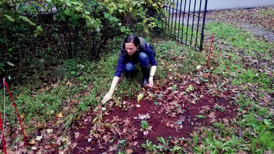 Amanda Bayley with her native plant garden at Teatown Reservation last fall.-
