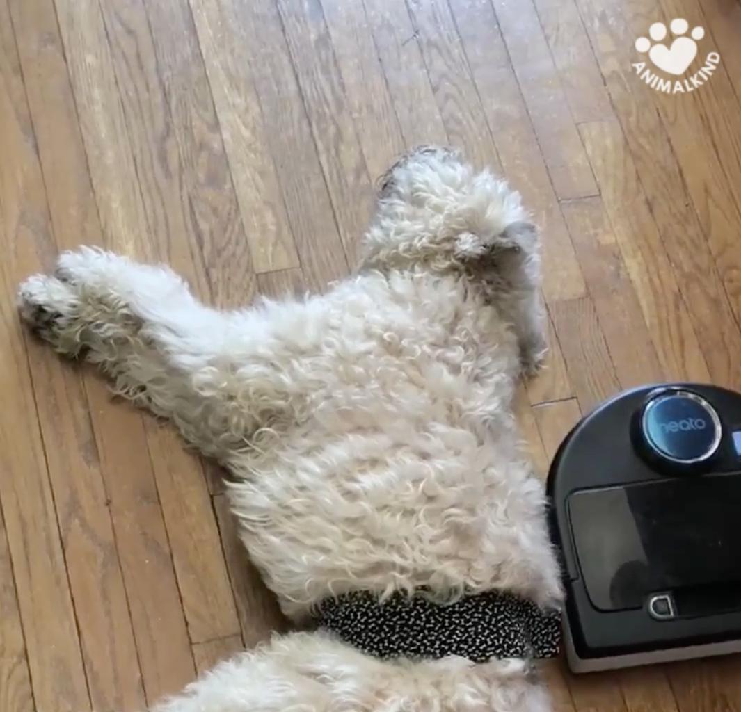 Vacuum can t wake sleepy dog