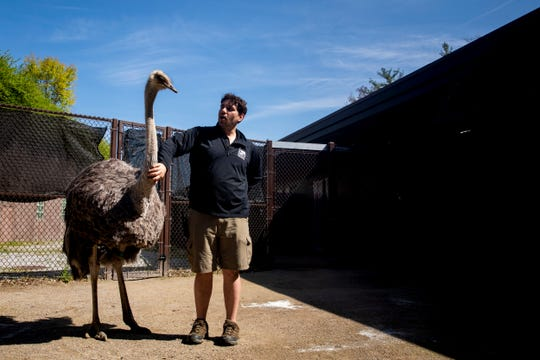 Dan Turoczi, a senior Africa keeper, pets Rose, the ostrich, after a medical test in April at the Cincinnati Zoo and Botanical Garden. Keepers create enrichment activities to build relationships with the animals, which makes it easier to perform medical tests or administer medicine.