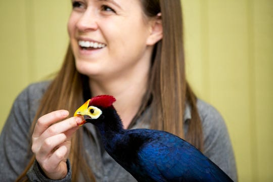 Colleen Lawrence gives Zulu, a turaco, a piece of raspberry during a training exercise in March at the Cincinnati Zoo and Botanical Garden.