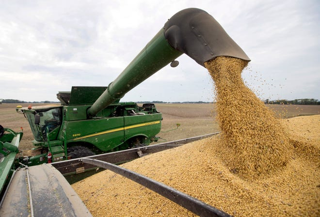 Mike Starkey offloads soybeans as he harvests his crops in Brownsburg, Ind.