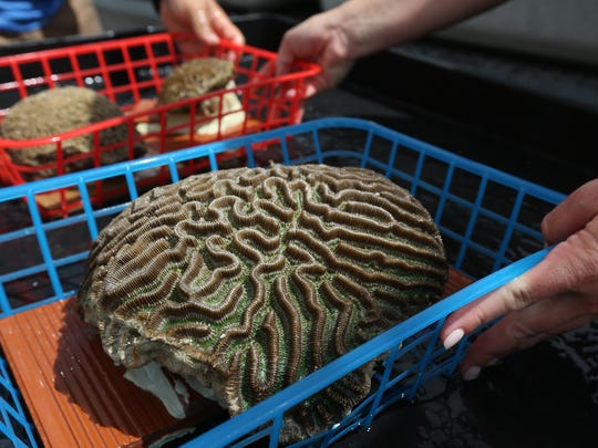 The first 'ark' loaded with 341 coral species from the Florida Keys arrived at the school May 23, 2019.