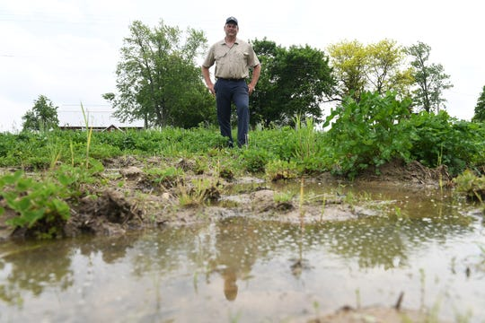 Jay Williams stands in one of his fields that is  too wet to plant corn. An old federal rule prevented farmers from draining wet areas on their property, Alexander writes.