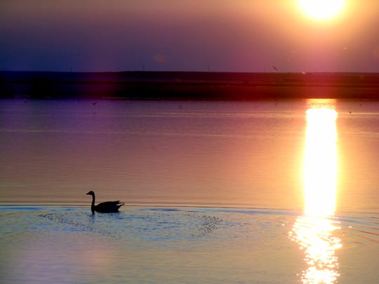 A bird glides through a smokey sunset at Benton Lake National Wildlife Refuge.