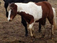 Stingl: More than a month later, the disappearance of a child's pony remains a mystery