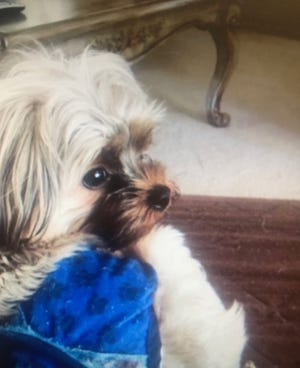 Farmington Hills police are looking for the possible trio that stole Hennessy, a puppy.