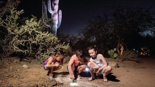 Flashlight tours at the Desert Botanical Garden in Phoenix begin June 1.