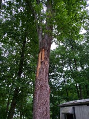 A tree was struck by lightning in the 300 block of East Butter Road in Conewago Township Wednesday, May 29. Photo courtesy of Strinestown Fire Co.