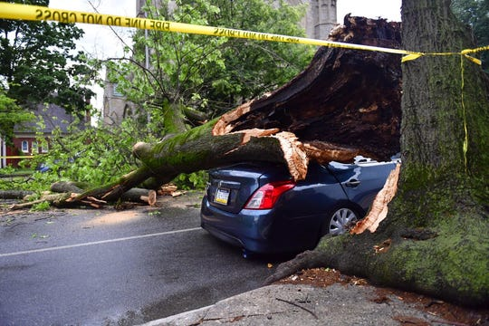 It's unclear whether the tree was brought down by a lighting strike or heavy winds, Wednesday, May 29, 2019.