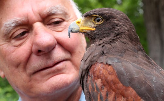 Green Chimney's Paul Kupchok  talks about the upcoming  27th annual Birds of Prey Day while holding a Harris Hawk at Green Chimneys in Patterson May 29, 2019.