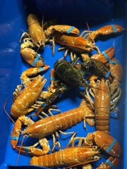 A collection of the rare orange lobsters discovered in a shipment by a Hy-Vee food distribution subsidiary on May 30, 2019.