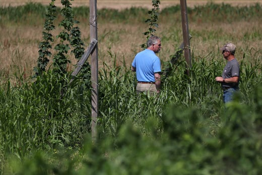 Bruce Kirksey, right, director of research at Agricenter International, stands next to President John Butler in a hops flower test growing area Friday, May 31, 2019.