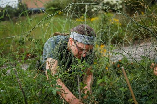 Some volunteers in gardens are the people who help out at Minnetrista, while others are the plants - sometimes called weeds - that grow unexpectedly.