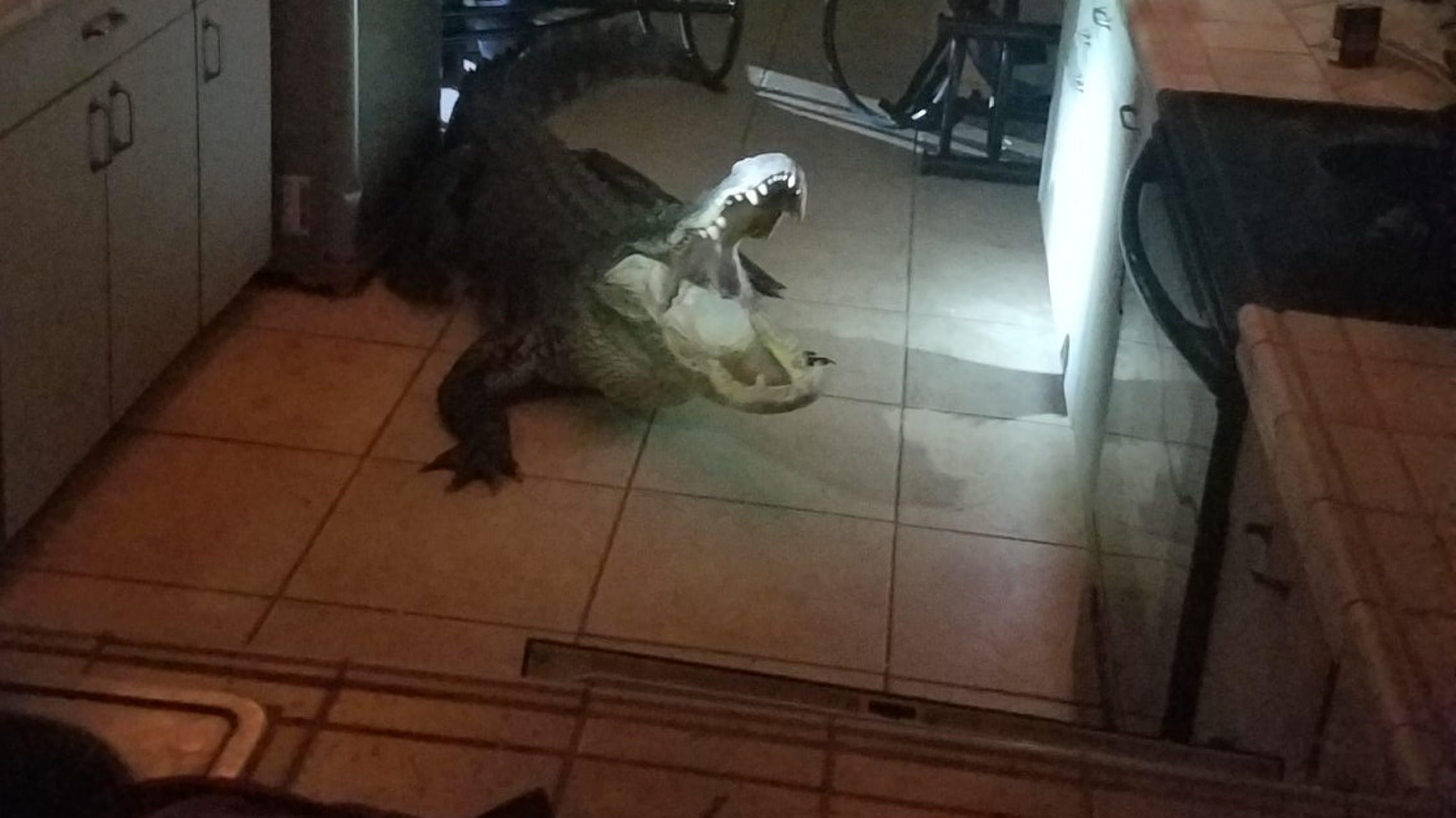 911 Call Alligator Breaks Window Crawls Into Florida Kitchen
