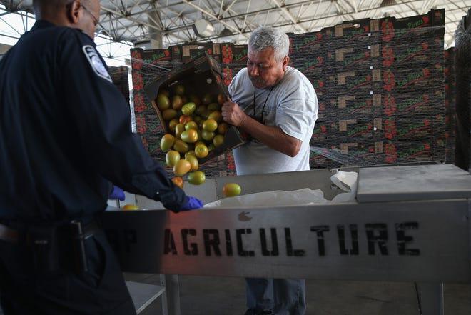 Un agente fronterizo revisa un cargamento de tomate procedente de México.