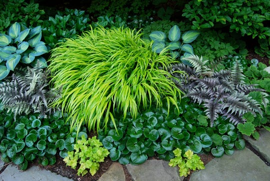 Along the front path flowers won't do the job, because I want many months of color. Foliage of Hosta 'June,' shiny European ginger, Japanese painted fern, Hakonechloa 'All Gold' grass and a couple of gold Heuchera give me five-plus months of it, something no flower will do, says gardener Margaret Roach.