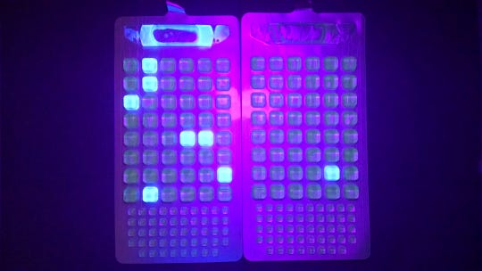 This image shows how the water sample testing will glow blue under a UV light if bacteria is detected.