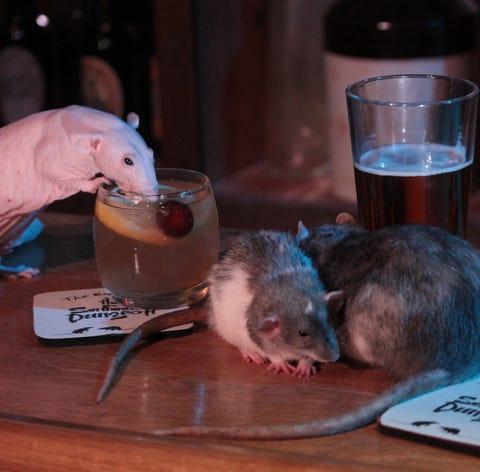 Rats on deck at San Francisco's upcoming Rat Bar.